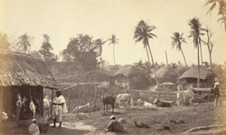 Native butcher's shop and cattle for slaughter [Bengal]